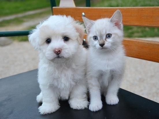 Кот и пёс дважды сдали хозяина-алиментщика судебным приставам