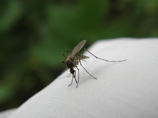 Женщина лишилась двух ног и руки из-за укуса комара