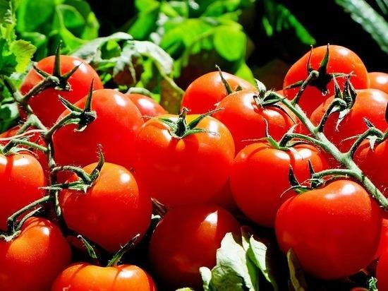 Госдума призвала Турцию не «раздувать пожары» в ответ на томатное эмбарго