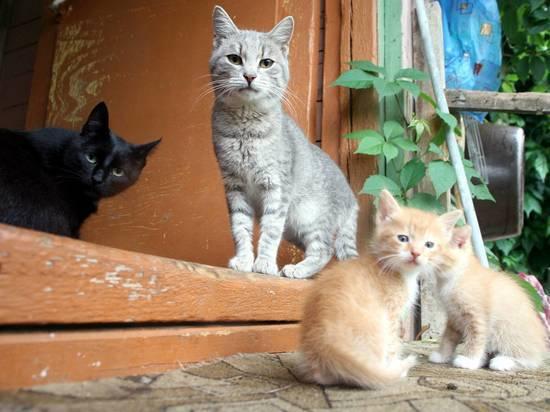 В Омске 40 кошек от голода съели умершего хозяина