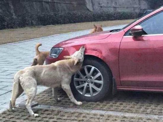 Бродячие собаки начали