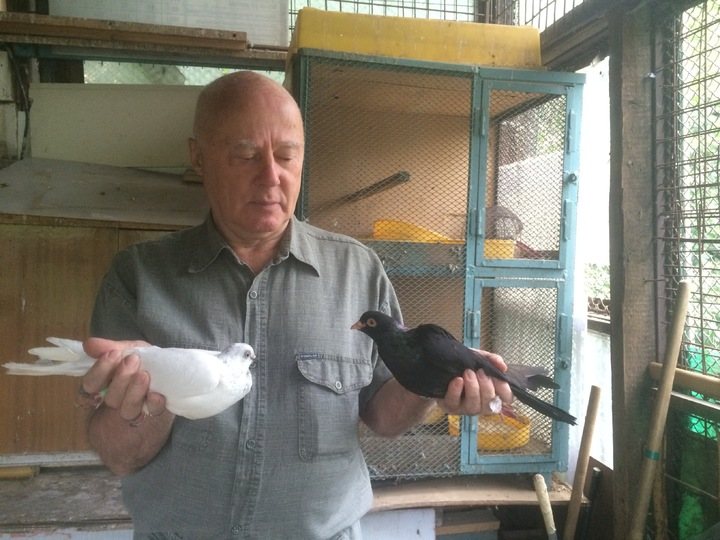 Воры разорили голубятню разработчика «искусственной почки» в Москве