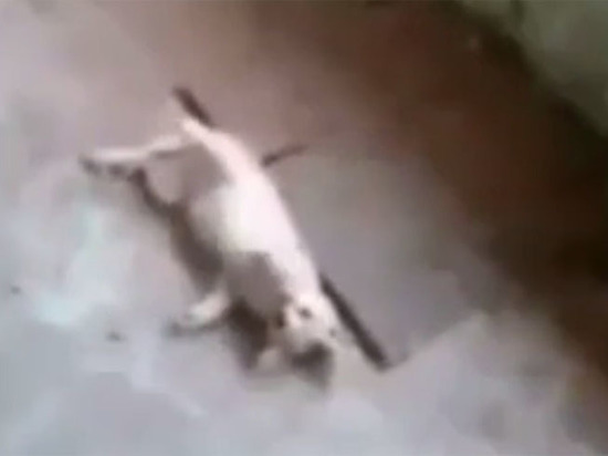 Бастрыкин поручил проверить видео убийства котенка самарскими детьми
