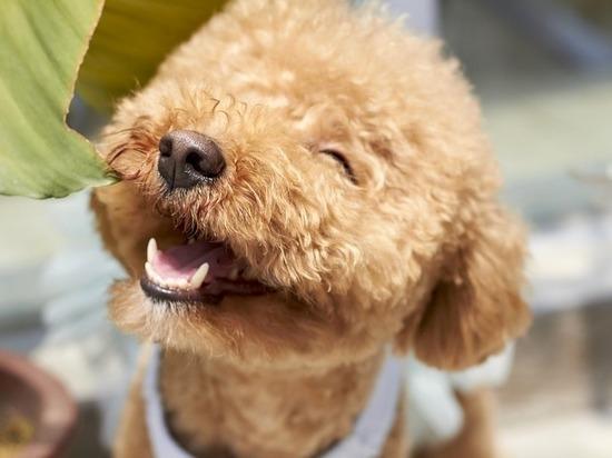 Иркутский изобретатель придумал брекеты для собак
