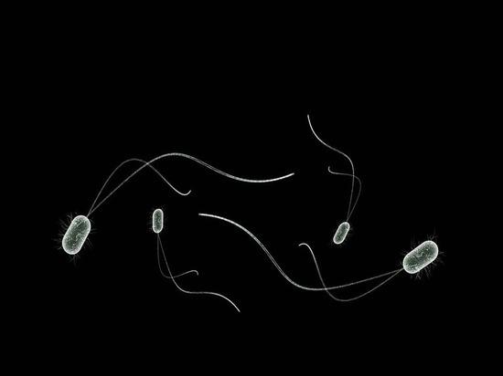 Ученые создали бактерии-киборги, пожирающие свет ипроизводящие уксус
