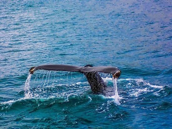 Древнейшие киты являлись страшными хищниками сострыми зубами— Ученые