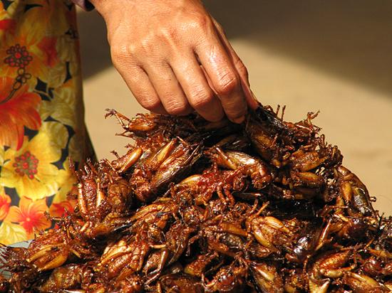 «Купили туркменских тараканов и приготовили их в микроволновой печи»