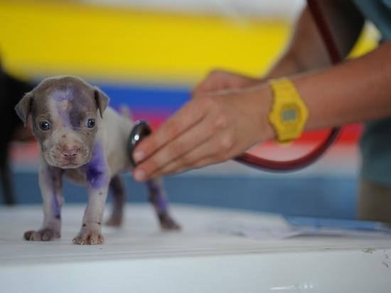 Ветеринаров могут обязать сообщать о случаях насилия над животными