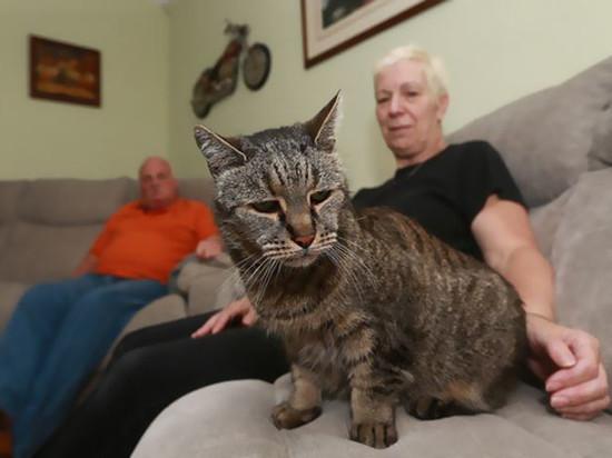 Скончался самый старый кот в мире