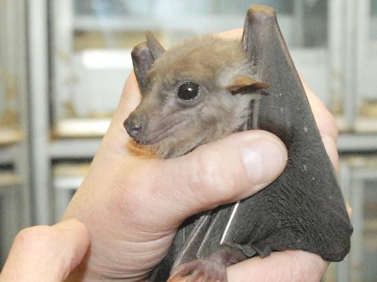 Летучие мыши стали частыми гостьями в столичных ветклиниках