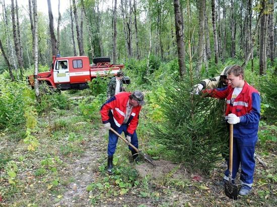 Более 300 саженцев европейской ели высадили в Губернском парке Калуги