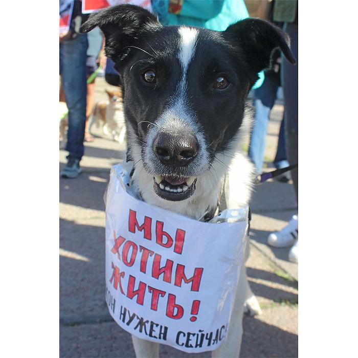 Более 300 омичей вышло на пикет в защиту животных