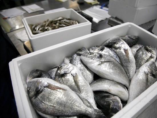 Минсельхоз предлагает увеличить налог завылов рыбы