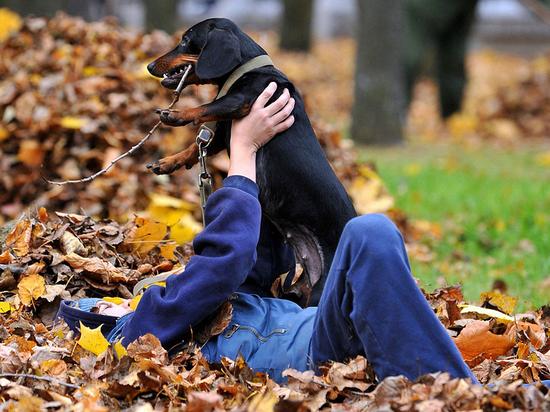 Осень: как укрепить иммунитет собаки