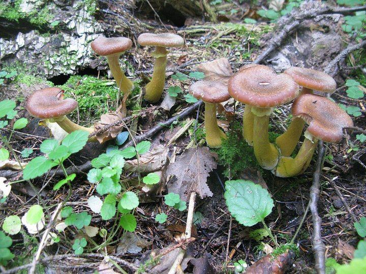 Секс пошла по грибы