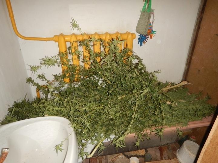 Конопля дома где выращивать сорт конопли гавайский снег