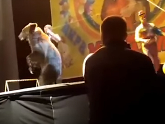 Медведь накинулся на дрессировщика во время представления для детей