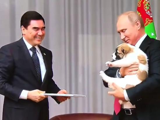 Путин поцеловал подаренного ему щенка алабая по кличке Верный