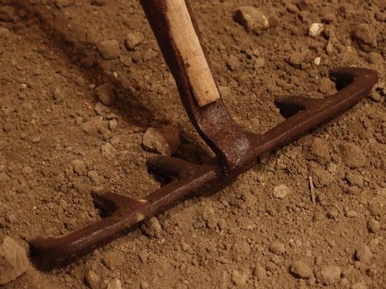 Волгоградка граблями отбила девочку у 57-летнего педофила