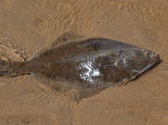 Вовсю глотку: Рыба запрыгнула вгорло поцеловавшему ее английскому рыбаку