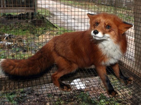 «Ситуация штатная»: тысячи животных погибли от голода на карельской звероферме