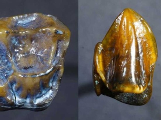 ВГермании найдены древнейшие человеческие зубы— Сенсационная находка