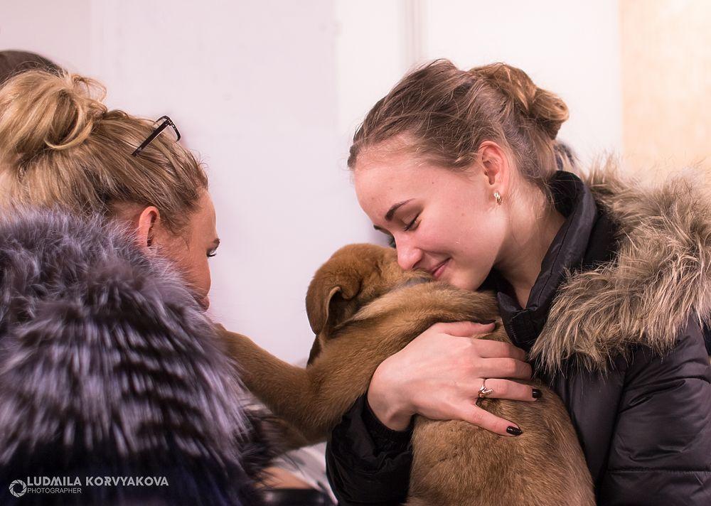 Кот и пес: Самые милые кадры с выставки-раздачи бездомных животных в Петрозаводске