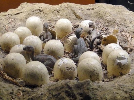 В Сибири обнаружили уникальное окаменелое яйцо динозавра