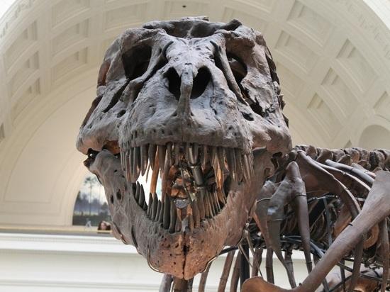 На спутнике Нептуна уфологи нашли «скелет динозавра»