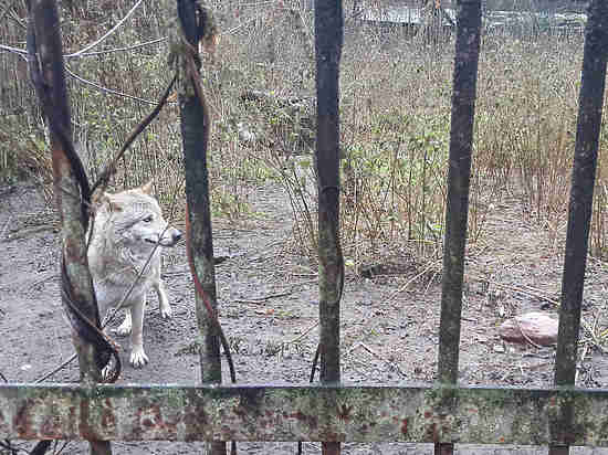 Московский зоопарк несомненно поможет  звериным  налегендарной кинозверобазе вЛеонове