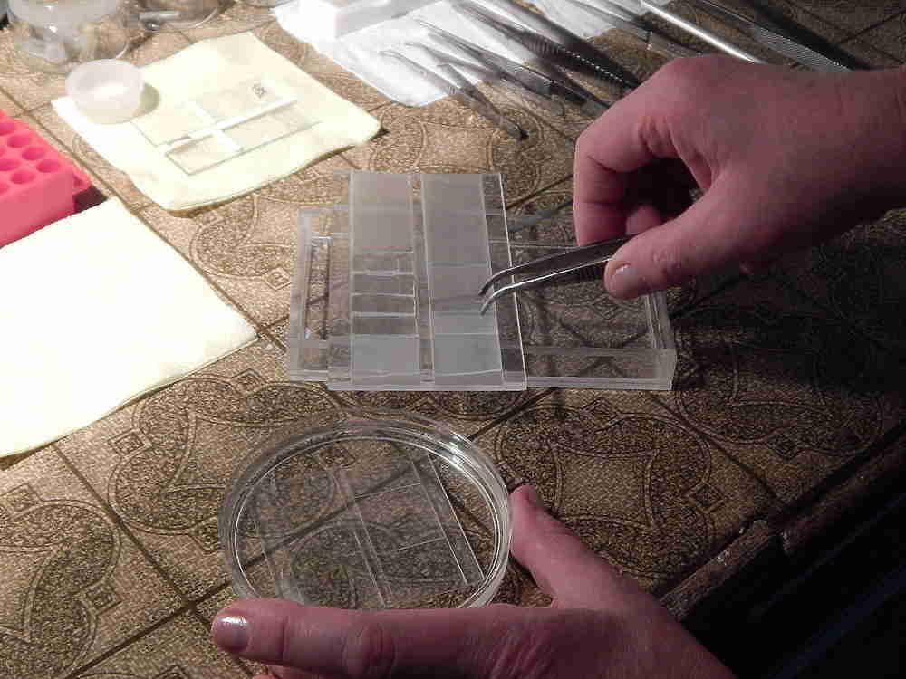 Пущинские биологи изучают повреждения ДНК в живых клетках