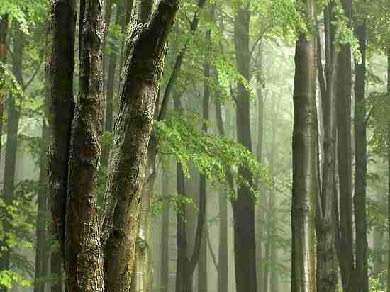 Увеличение концентрации кислорода ватмосфере стало первопричиной жизни наЗемле
