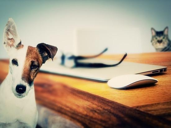 Нейрофизиологи представили доказательство, что собаки умнее кошек