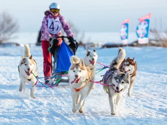 Что интересного готовят для гостей «Алтайской зимовки»