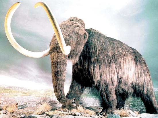 Жителям златоглавой покажут чучело мамонта и бриллианты