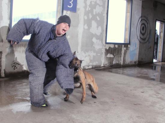 Госдума вознамерилась запретить традиционные способы тренировки собак