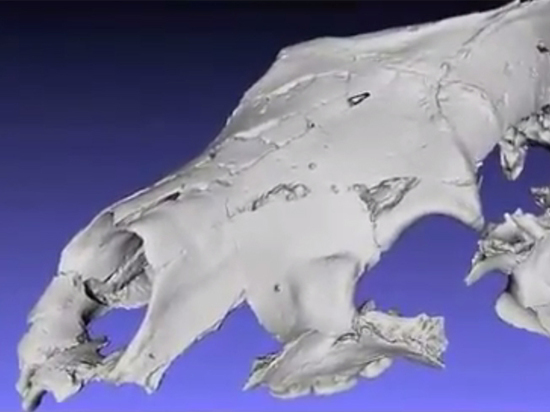 В Канаде обнаружили древнего медведя-сладкоежку