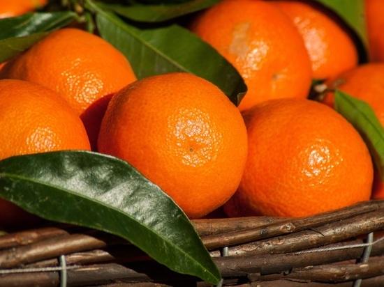 Урожай абхазских мандаринов сожрал мраморный клоп: китайская диверсия