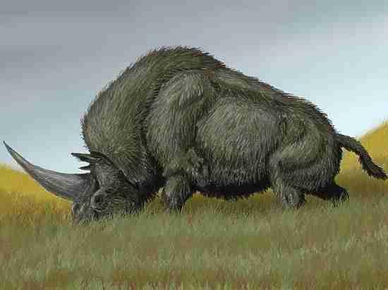 Палеонтологи выяснили, что недавно по Казахстану бродили единороги