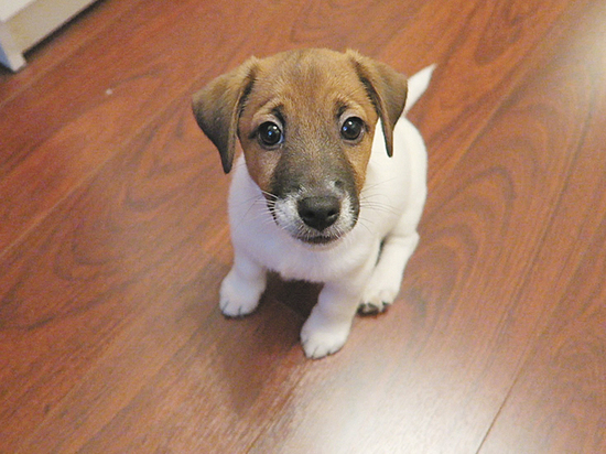 Год Желтой Земляной Собаки: что сулит и в чем встречать