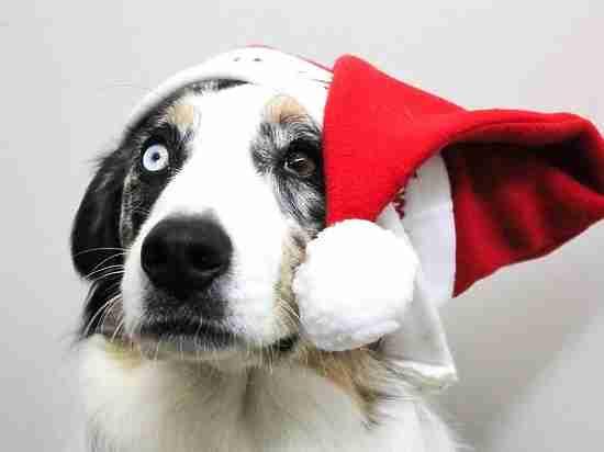 Год Желтой Собаки 2018: маги дали прогноз