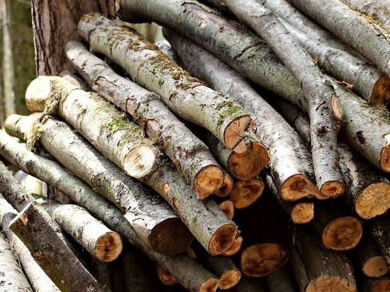 На Алтае глава сельсовета и местный бизнесмен воровали лес