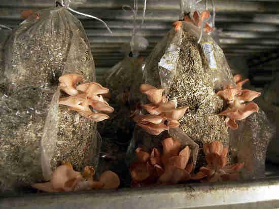 Аномальная зима заставила правительство поддержать грибников: им помогут разбогатеть