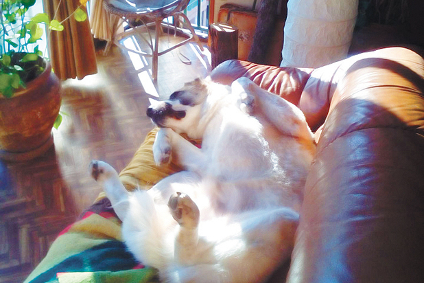 """Спасти брошенных алабаев: """"Собаки прибывают с пугающим постоянством"""""""