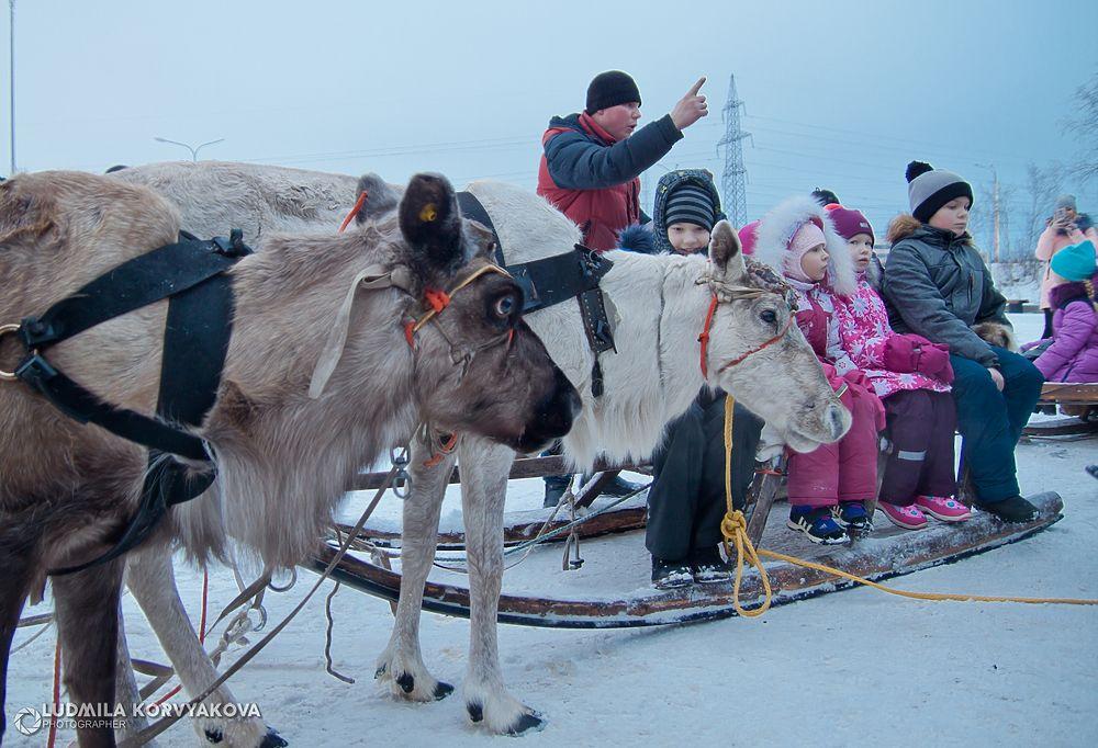 Лучшие кадры: Талви Укко приехал в Петрозаводск на оленях