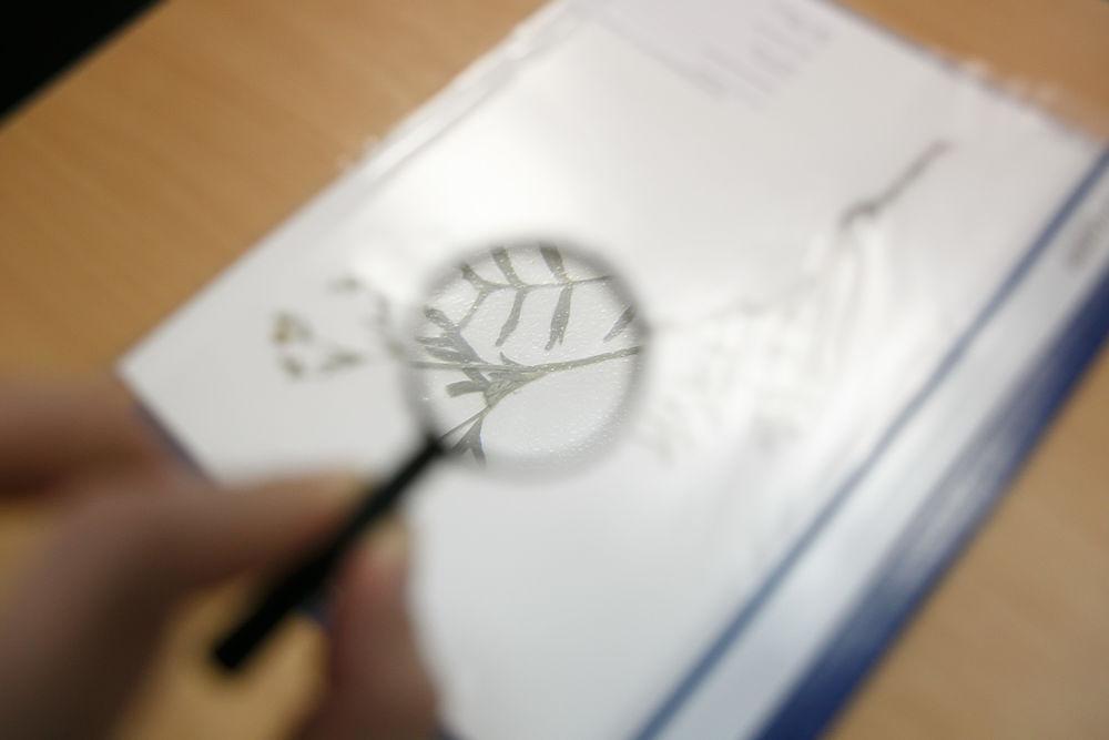 В Волгограде прошел региональный этап Всероссийской олимпиады по биологии - фоторепортаж