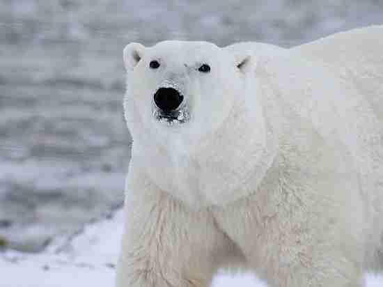Человечество погибнет от отравления ртутью во время глобального потепления