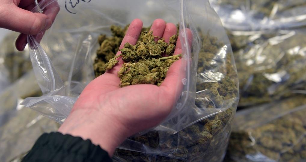 Калужская область марихуана плантация марихуаны 13 медведей