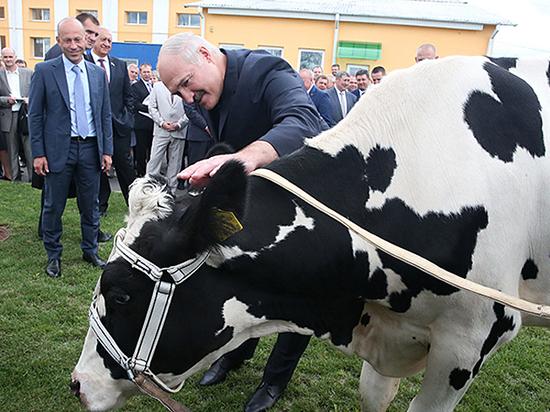России грозит дефицит плюшек и сыра из-за запрета белорусского молока
