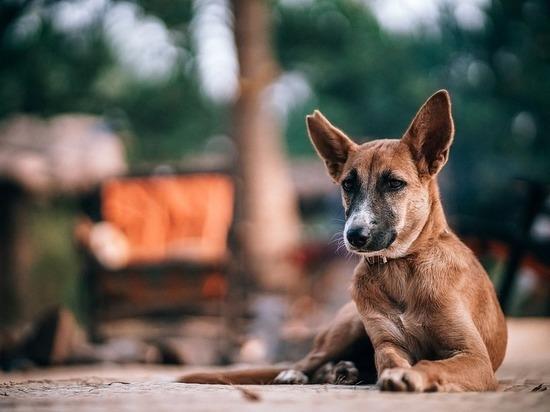 Жители соловьиного края просят создать приют для бездомных животных